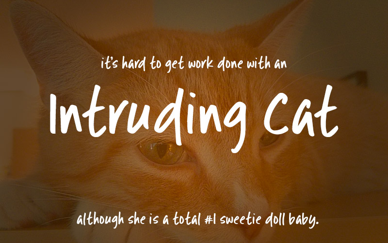 Font101 - our result: the Intruding Cat font